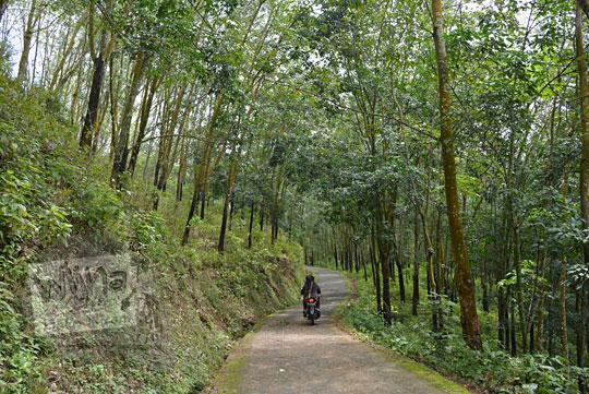 jalan membelah hutan karet jenawi