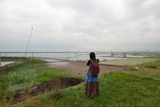 wanita memotret pinggir sawah rawa pening ambarawa