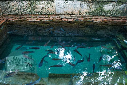 wujud ikan keramat yang hidup di kolam petirtaan candi penataran