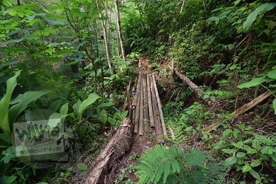 jembatan kayu girimulyo kulon progo