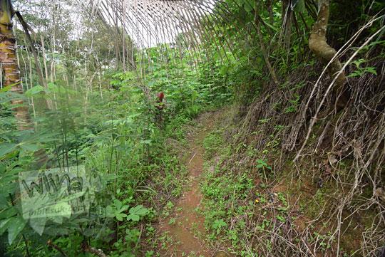 jalan setapak hutan girimulyo kulon progo