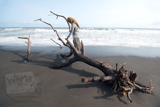 wanita memanjat bangkai pohon di pantai bugel kulon progo
