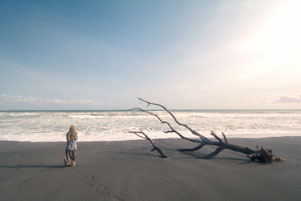Pantai Bugel dan Bangkai Pohon Cemara