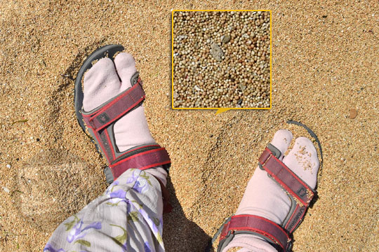 jenis pasir pantai nambung di pulau lombok