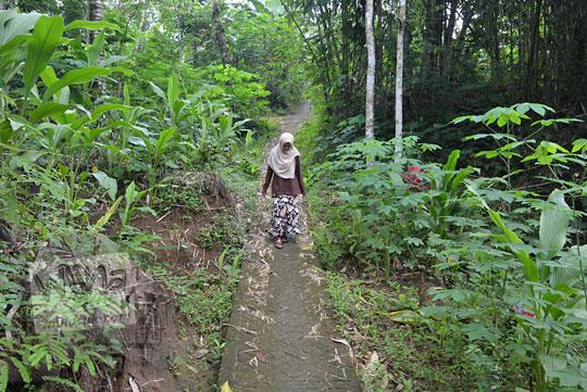 jalan turunan licin menuju air terjun kembar mayang ngedok di kaligesing purworejo