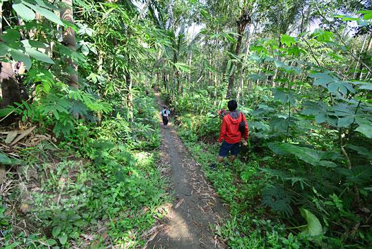 turis lokal dipandu warga menuju air terjun kembar mayang atau curug ngedok di kaligesing purworejo