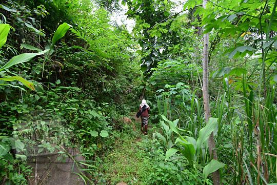 wanita berjalan kaki di dalam hutan kaligesing purworejo