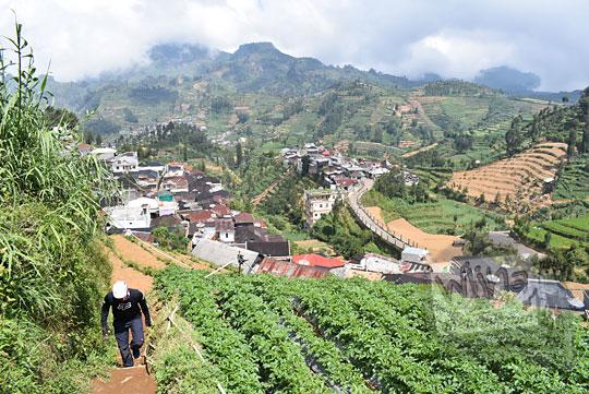 jalan ladang terasering ke pos 1 pendakian gunung prau via kalilembu