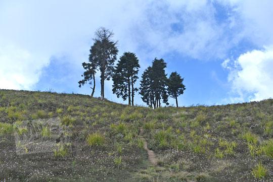 deretan pohon puncak bukit puncak gunung prau