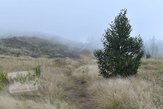 pohon kabut padang rumput sabana puncak gunung prau