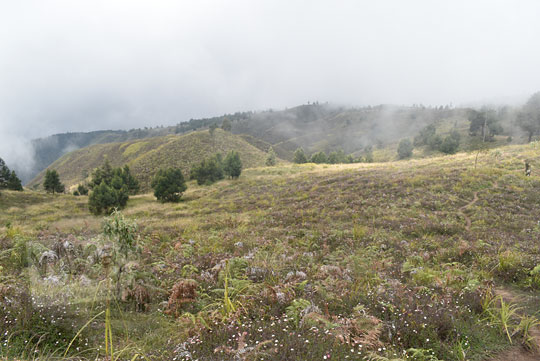 pemandangan padang rumput dari bukit teletubbies gunung prau
