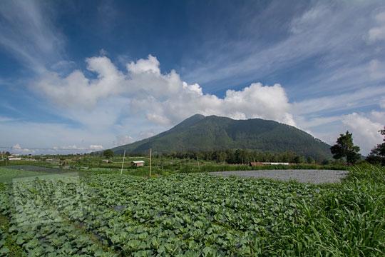 hamparan ladang berpemandangan gunung telomoyo di ngablak magelang