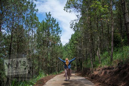 hutan pinus di dusun pagergunung kawasan lereng gunung telomoyo semarang