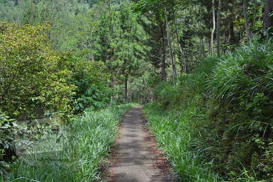 jalan hutan sempit dari dusun pranten ke pusat desa seloprojo magelang