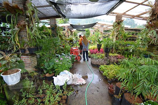 kios anggrek terbesar terkenal nglurah tawangmangu