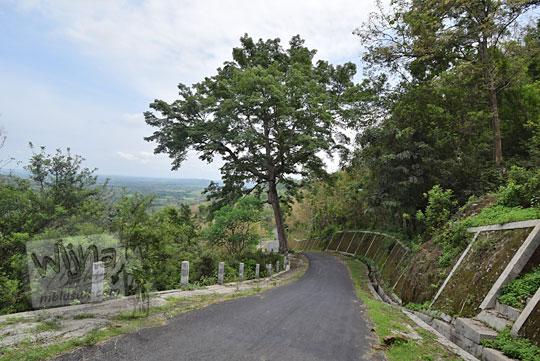 pohon besar jalan turunan gedangsari gunungkidul