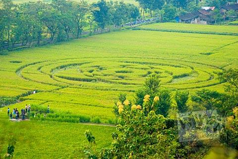 Penampakan Fenomena Crop Circle Berbah di tengah sawah hijau pada tahun 2011