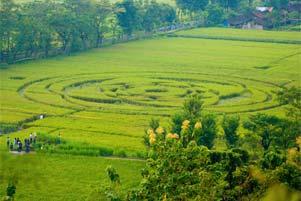 Thumbnail untuk artikel blog berjudul Fenomena Crop Circle Berbah: Atraksi atau Konspirasi?