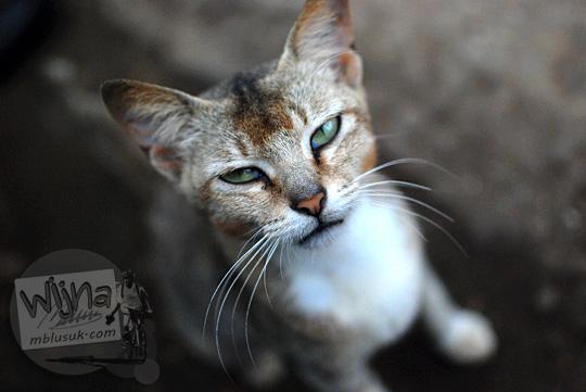 review kualitas foto bokeh obyek mata kucing lucu dengan memakai lensa AF-S DX Nikkor 35mm dan kamera nikon d80