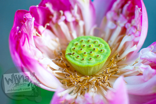review kualitas foto bunga close up makro dengan memakai lensa AF-S DX Nikkor 35mm dan kamera nikon d80