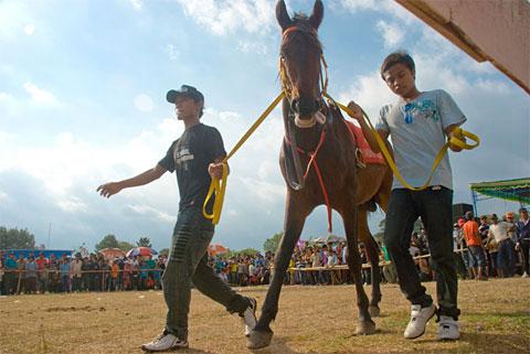 Foto kuda peserta di Pacuan Kuda di Lapangan desa Kebondalem Kidul, Prambanan, Klaten, Jawa Tengah