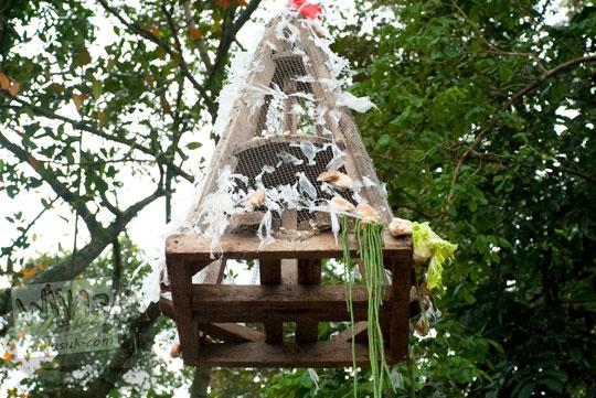 gunungan kue apem di upacara saparan pondok wonolelo ludes habis diserbu warga yang mencari berkah