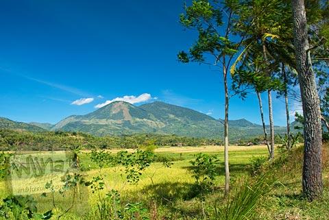Pemandangan indah sawah dari hutan berlatar gunung di Garut, Jawa Barat tahun 2009