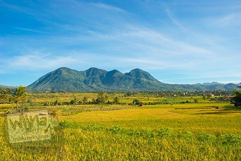 pemandangan hamparan permadani sawah menguning berlatar gunung dan bukit di Garut, Jawa Barat tahun 2009