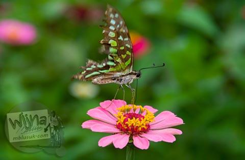 foto Kupu-kupu cantik di Candi Pringapus di Temanggung, Jawa Tengah pada tahun 2010