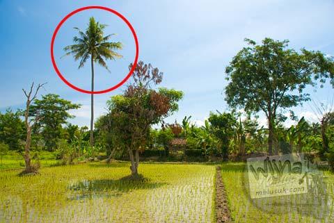 Lokasi Candi Klodangan di Sendangtirto, Berbah, Yogyakarta tahun 2009