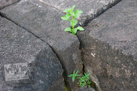 Foto Batu Lapuk Kena Air di Candi Lumbung, Prambanan Dipugar pada April 2009