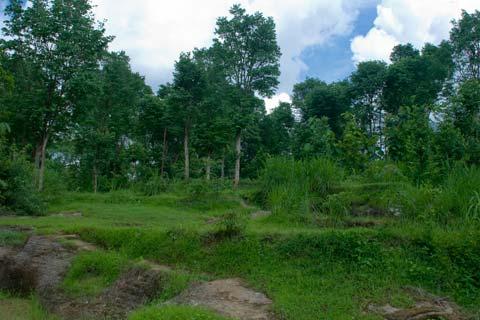 Foto Jalan Hutan menuju ke Candi Miri, Prambanan, Yogyakarta di tahun 2008