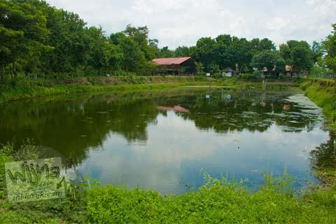 Foto Candi Kedulan, Kalasan, Yogyakarta yang terendam air menjadi kolam ikan pada Januari 2009