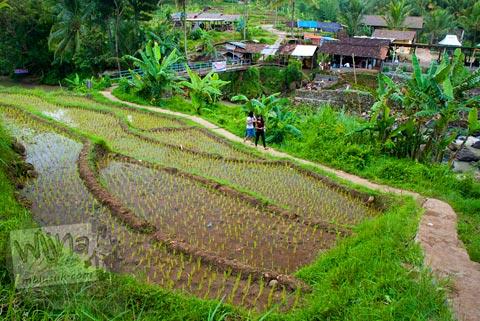 Sawah berterasering yang ada di sekeliling Candi Ngempon di Ungaran, Jawa Tengah pada tahun 2010
