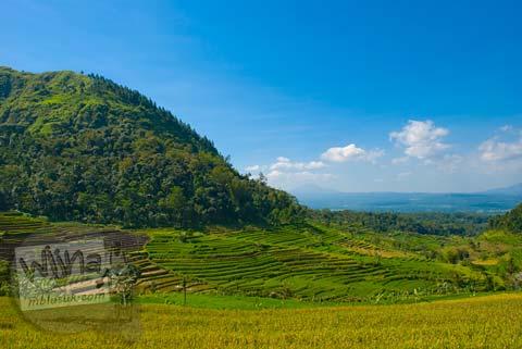 Foto perbukitan Sawah di Candi Selogriyo, Magelang, Jawa Tengah pada tahun 2009
