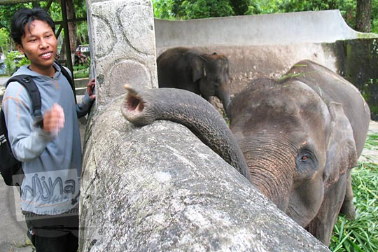 kandang gajah kebun binatang gembiraloka pada zaman dulu di yogyakarta tahun 2006
