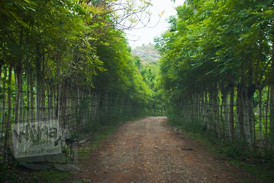 foto medan jalan hutan bambu menuju air terjun Kuta Malaka, Aceh Besar pada zaman dulu september 2014
