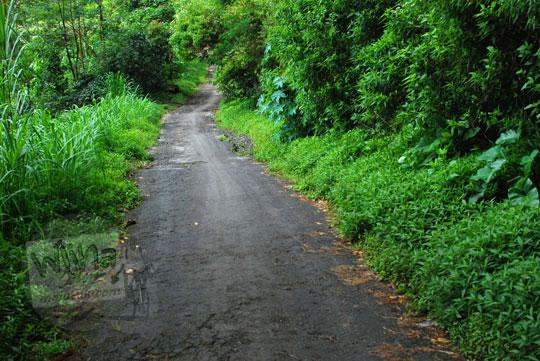 foto jalan hutan yang angker menuju ke air terjun sekumpul buleleng zaman dulu pada april 2013