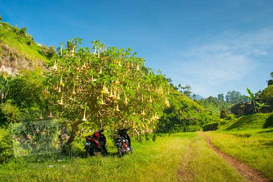 pemandangan indah menuju Curug Bugbrug, Bandung Barat pada zaman dulu Agustus 2014