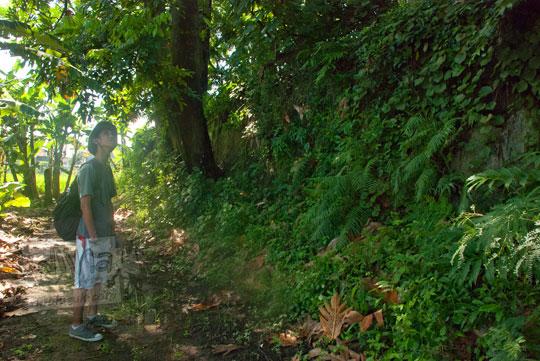 foto semak rumput liar yang menutupi pesanggrahan gedong pusaka peninggalan sultan hamengkubuwono ii di yogyakarta pada zaman dulu maret 2012
