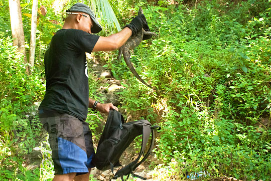 Mbah Gundul menangkap reptil biawak yang hidup dekat air terjun curug seribu batu (cengkehan) di dusun Giriloyo, Wukirsari, Imogiri, Bantul, DI Yogyakarta