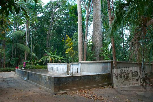 pohon randu raksasa yang tumbuh di desa mangir, pajangan, bantul