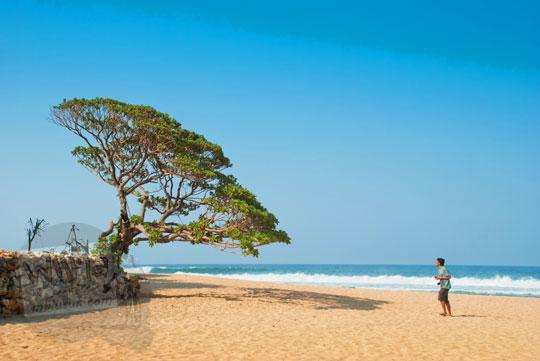 tips memotret pohon spot foto unik di pantai Pok Tunggal, Gunungkidul