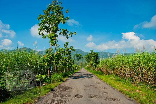 Jalan desa dikelilingi tebu menuju ke Gunungkidul dari arah Bayat, Klaten pada zaman dulu Mei 2013
