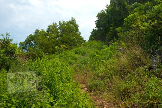 jalan setapak yang ditumbuhi semak-semak menuju ke pantai ngunggah, gunungkidul di tahun 2014 pada zaman dulu Juni 2014