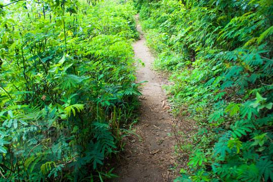 foto jalan hutan ke air terjun coban talun di kota batu jawa timur zaman dulu pada november 2014