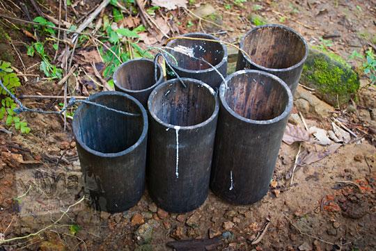wadah bambu yang digunakan warga dusun Beteng, Girimulyo, Kulon Progo untuk menderes aren