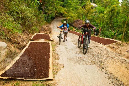 foto cengkeh-cengkeh menoreh dari desa giripurno dijemur kering di sepanjang jalan desa