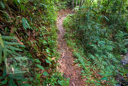 Jalan hutan menuju Sungai Kedung Gulo di Desa Kalitapas, Kecamatan Bener, Kabupaten Purworejo, Jawa Tengah