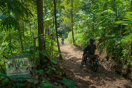 medan perjalanan hutan ke Curug Klanceng Putih, Sedayu, Purworejo